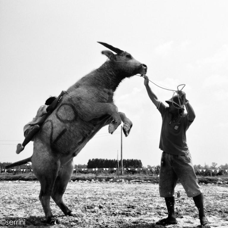 bufalo buck'n