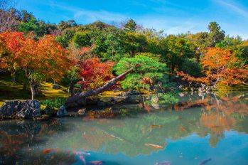 6 Nijo Castle _kyoto_16