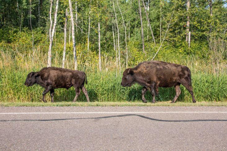 Edmonton Elk Island3