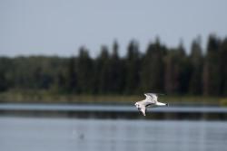 Edmonton Elk Island37