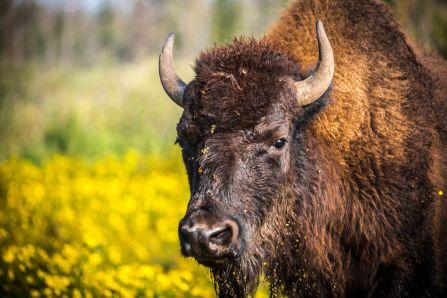Edmonton Elk Island8