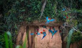 birds_peru_serrini_111