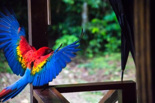 birds_peru_serrini_129