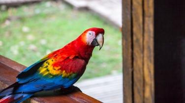 birds_peru_serrini_130