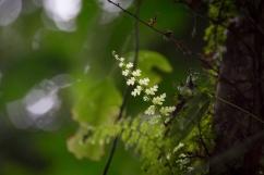 nature_peru_serrini_123